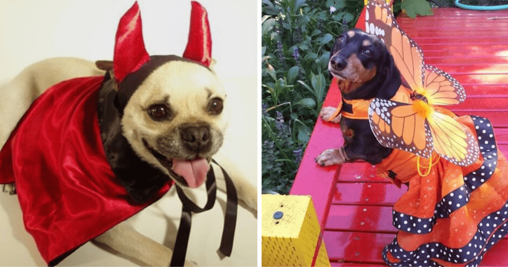 The left photo shows a dog in a devil costume and the right shows a dog in a butterfly costume.