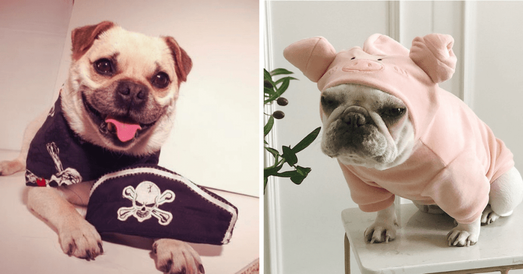 The left photo shows a dog in a pirate costume. The right photo shows a pug in a pig costume.